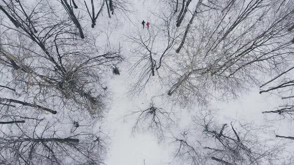 Thumbnail for A Man and a Woman Run in the Winter Through the Woods Training and Doing Their Health