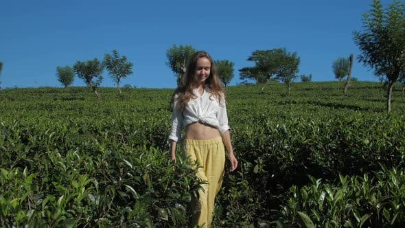 Thumbnail for Lady Walks Among Tea Bushes Under Blue Sky Slow Motion