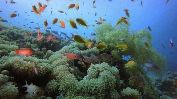 Thumbnail for Underwater Sea Marine Life