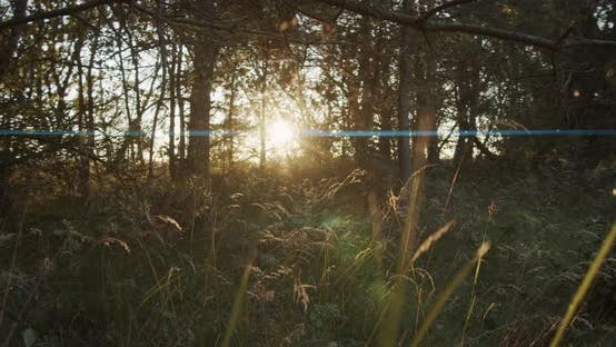 Thumbnail for Forest with Anamorphic Lens Flare Effect