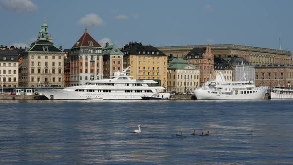 Thumbnail for Swan family in Stockholm