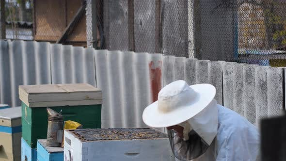 Thumbnail for Man in Protective Suit Beekeeper Works with Beehives in Apiary Uses Smoker Device To Scare Away Evil