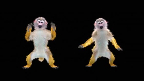 Monkey Dance HD