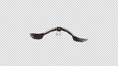 Sea Eagle - 4K Flying Loop - Front View