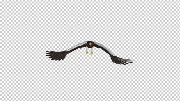 Thumbnail for Sea Eagle - 4K Flying Loop - Front View