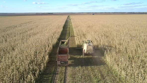 Thumbnail for Forage Harvester Cuts Corn and Unloads in Transport