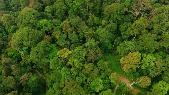 High Angle Aerial Top Down Drone Shot of Lush Green Tropical Primeval Rain Forest