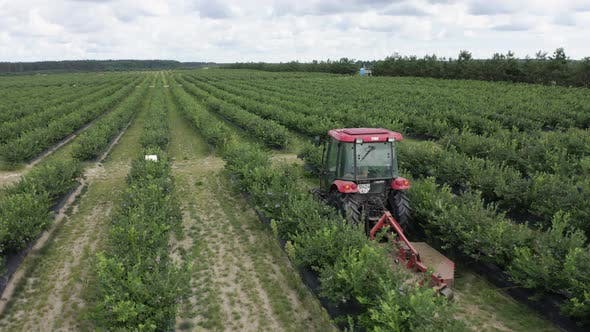 Thumbnail for Aerial Tracking Shot of Tractor Rides Along Green Raws of Blueberry Field on Blueberry Plantation