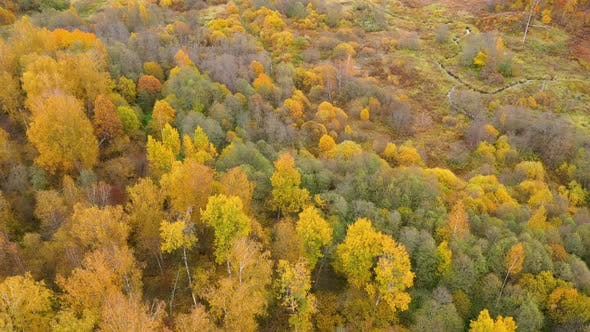 Thumbnail for Flight Over the Autumn Forest. Crowns of Trees with Yellow Foliage. Deciduous Forest in the Fall