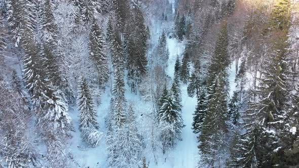Thumbnail for Aerial View on Car Riding on Snowy Road in a Winter Coniferous Forest