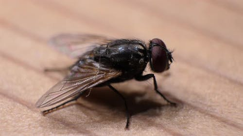 Fly Moving