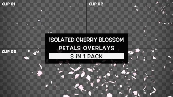 Isolated Cherry Blossom Petals Overlays Pack