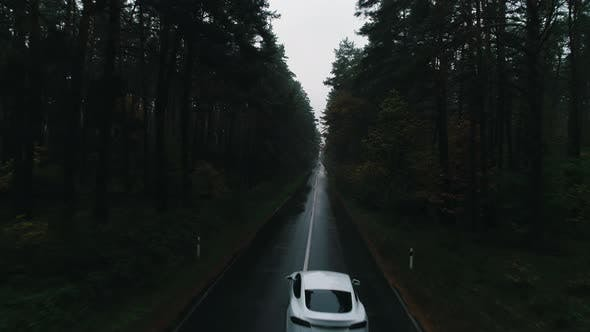 Tesla Rides on a Forest Road