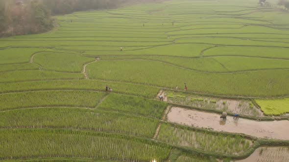 Aerial view of farmers working in paddy fields