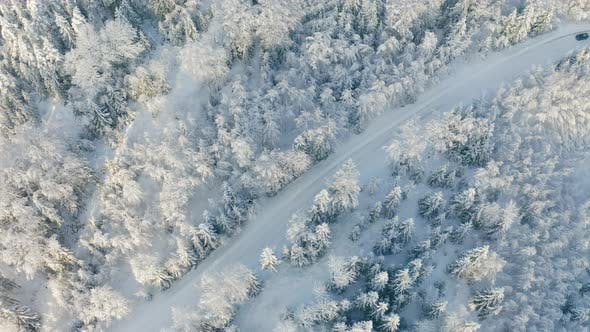 Directly Above Large Forest and Driving Car on Road in the Cold Winter
