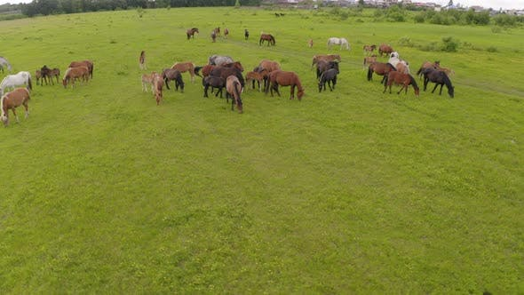 Cover Image for A Herd of Horses Graze in a Green Meadow Along the River