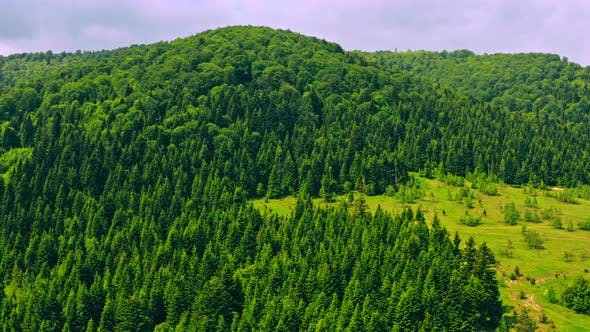 Thumbnail for Aerial View on Forest in Summer