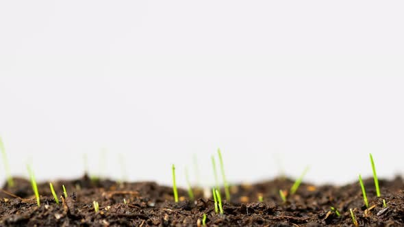 Close-up view of growing grass in time-lapse