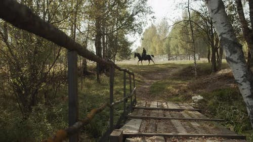 Old Wooden Bridge. Rural Landscape. A Young Rider on a Horse Walks Under the Shade of Birch Trees on