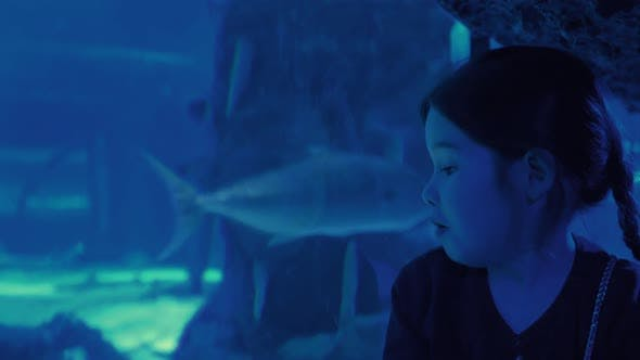 Thumbnail for Cute Girl Watching Fishes in a Large Aquarium