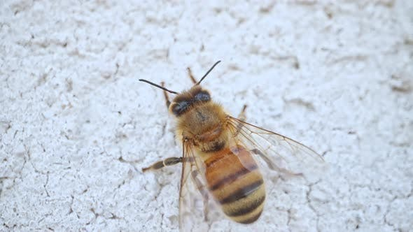 Up close view of honey bee walking across white surface