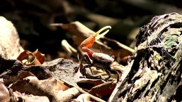 Thumbnail for Crab in its Natural Habitat in the Caribbean