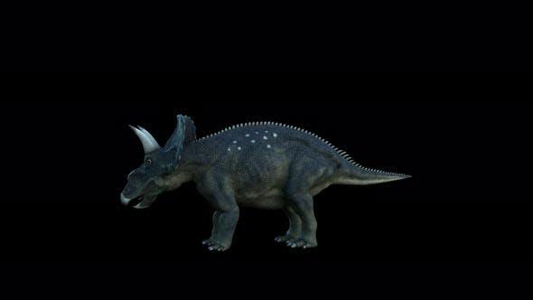 Thumbnail for 4K Diceratops Dinosaur