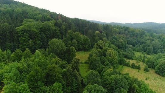 Thumbnail for Aerial view of Woods
