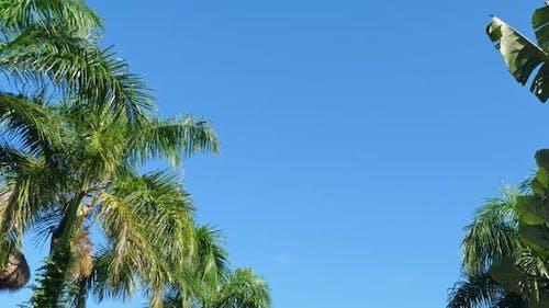 Spitze von Kokospalmen und strohgedecktem Palapa-Dach auf blauem Himmel Hintergrund