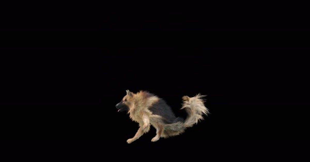Dog Dance 4K