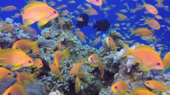 Thumbnail for Beautiful Underwater Corals and Tropical Colorful Fishes