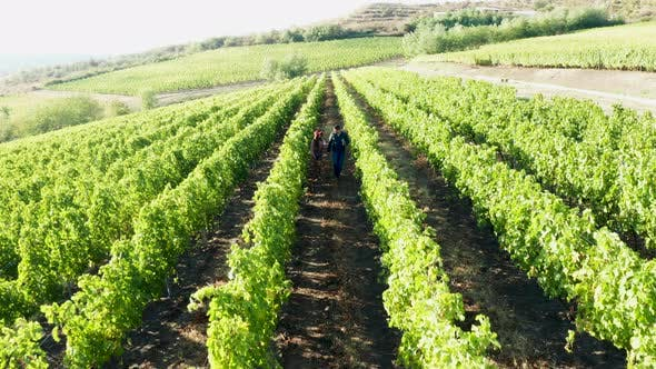 Cover Image for Beautiful Caucasian Couple Walking in Vineyard with Glasses of Wine