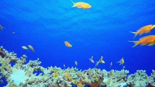 Underwater Beautiful Scene