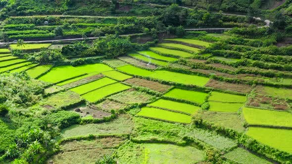 Rice Terraces in the Philippines. The Village Is in a Valley Among the Rice Terraces. Rice
