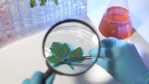 Female Biochemist Examine Plant Leaf Through Magnifying Glass in Lab