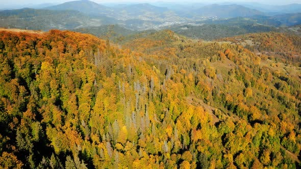Thumbnail for Aerial View Autumn Trees in Highlands