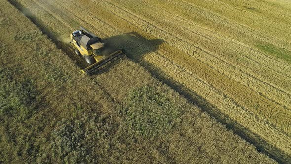 Aerial Drone Footage. Combine Harvester Gathers the Wheat. Harvesting Grain Field. Beautiful Natural