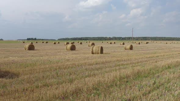 Thumbnail for Haystacks Rolls