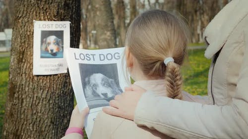 The Family Is Looking for His Missing Dog