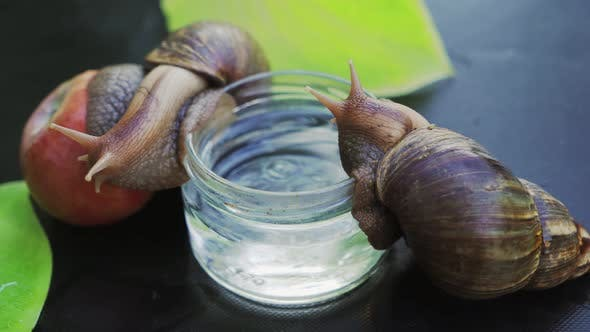 Big Snail Leans on an Apple and Climbs Into a Jar with Water