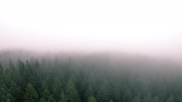 Thumbnail for Aerial Flyback In Hazy Fog Clouds Over Pacific Northwest Wilderness Forest