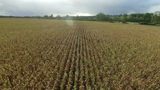 Thumbnail for Aerial view of cornfield