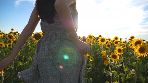 Unrecognizable Brunette Running Through Yellow Sunflower Field