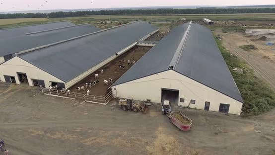 Thumbnail for Aerial View of Feeding Truck Gets Closer To Paddock with Cows