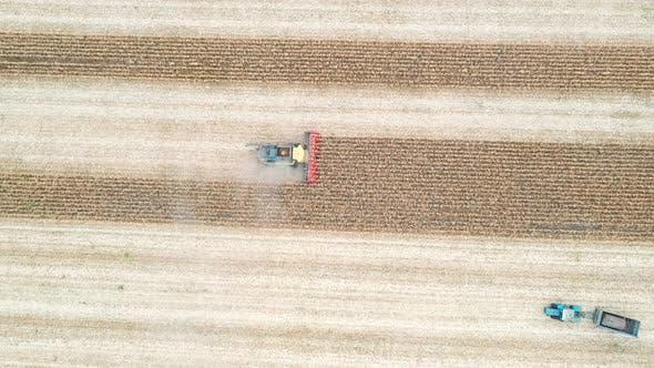 Luftaufnahme von Combine Gathering Maiskultur. Fliegen über Ackerland während des Ernteprozesses.  Ansicht