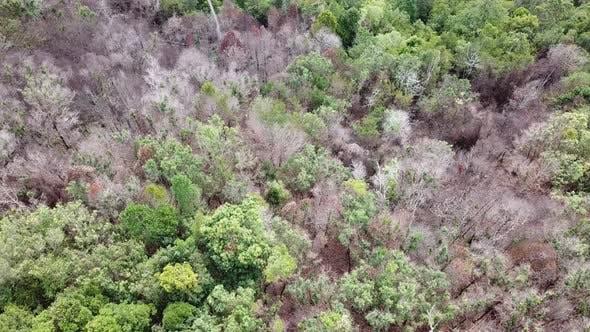 Aerial looking dry dead trees.