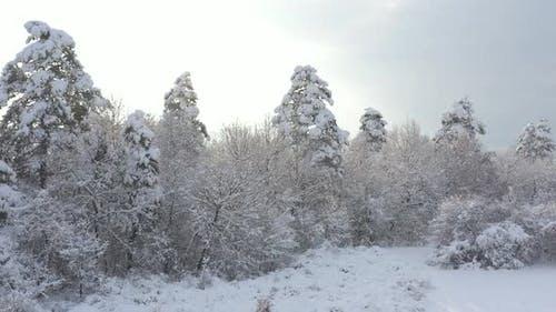 Weiches Licht über den verschneiten Wald 4K LuftVideo