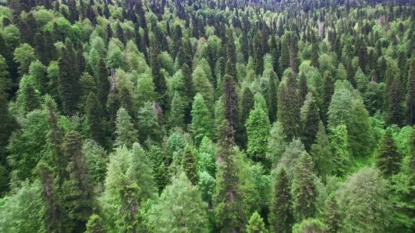 Thumbnail for Aerial View Above Green Forest