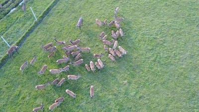 Top View of a Group of Baby Deer Deer