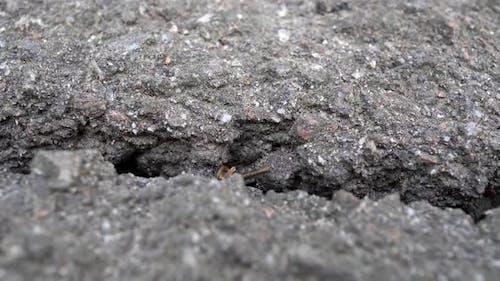 Crack In The Asphalt